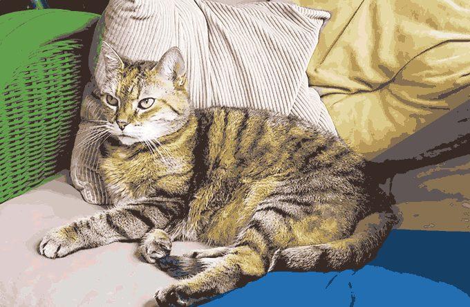 5a44ffd9d03d1_cat2.jpg