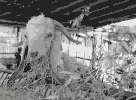 5a45027629ade_go-goat.jpg