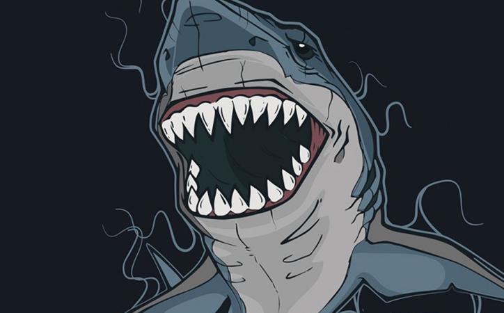 Expert Tips to Avoid A Serious Shark Encounter