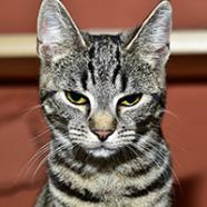 Profile picture of Jhon Smith