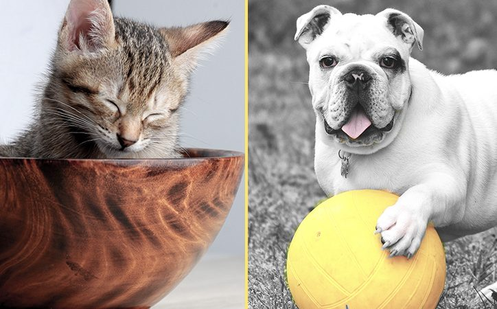 "Wondering what pet is right for you… Keep asking yourself ""What pet should I get?"""