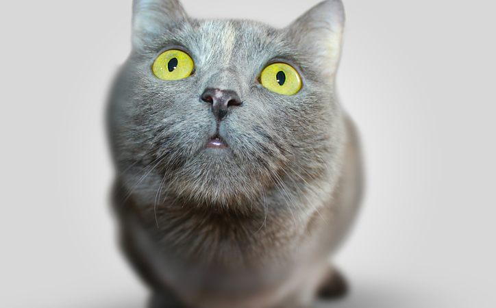 7 Reasons Why A Cat Is The Perfect Best Friend