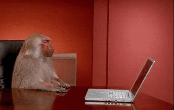 GIF: Monkey and the laptop